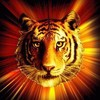 7-tiger-7