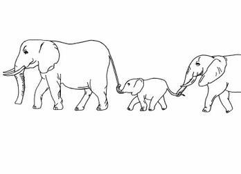 La foire aux questions des l phants dessins - Dessins d elephants ...